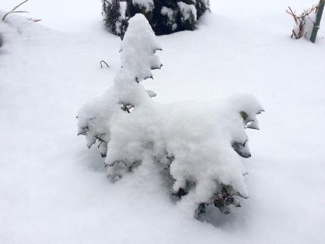 Gehölz im Schnee