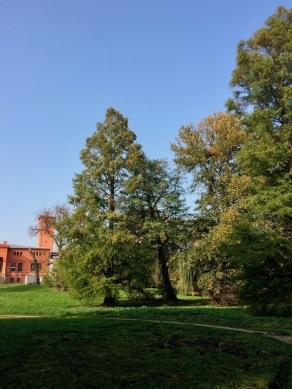 alte Parkbäume
