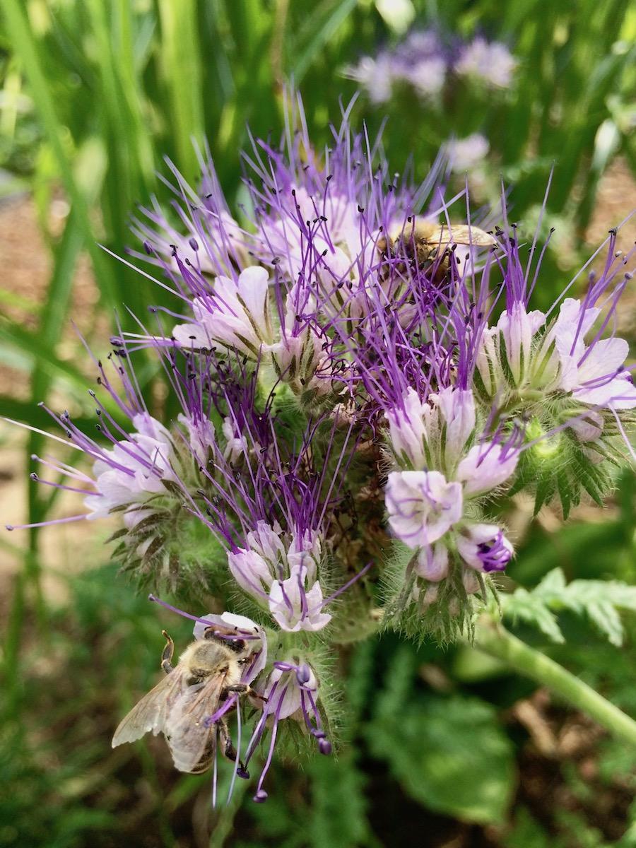 2 Bienen